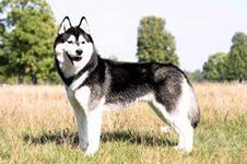 А вот происхождение самой собаки представляется  в научной литературе в виде различных гипотез.