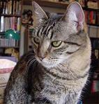 Как и люди кошки могут рождаться глухими или, что происходит чаще, постепенно терять слух по мере старения.