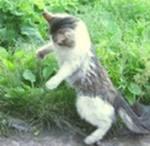 Кошка в сельской местности выполняет свою функцию.