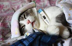 Симптомы кашля собак и кошек распознать легко