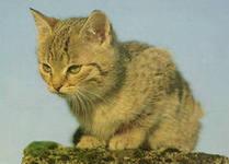 Если понос у кошки вызвали внутренние паразиты (глисты)  необходимо назначить ей лечение лекарственными препаратами.