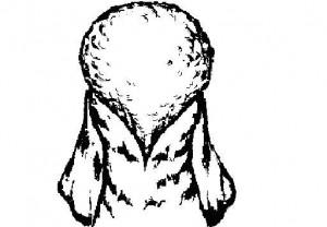 Общий вид стрижки «Капля». Позволяет подчеркнуть стать собаки и показать великолепное качество шерсти.