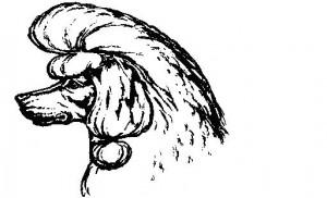 Если у вас уже сделана какая-либо стрижка  с оставленной длинной шерстью на ушах, то обязательно сделайте «прическу для ушей». Это и красиво, и защитит шерсть пуделя от спутывания и загрязнения.