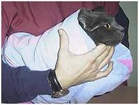 Фиксация собак и кошек необходима для того, что бы обезопасить себя и обслуживающий персонал при оказании ветеринарной помощи.