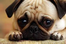 Что, камни в мочевом пузыре у собаки или у кошки?