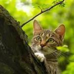 Лесной кот это жестокий охотник