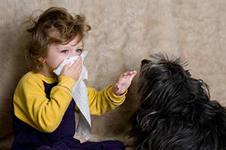 Алергия-это наиболее распространенное хроническое заболевание в мире